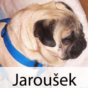 Jarouše