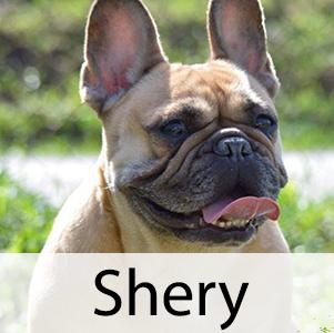 Shery